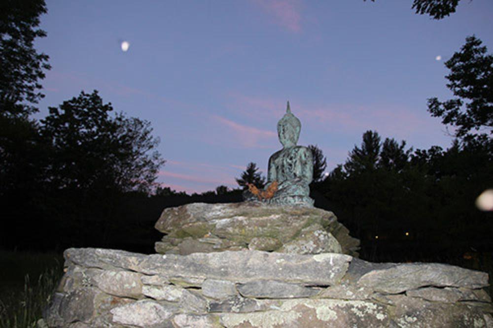 Forest Refuge Meadow Buddha