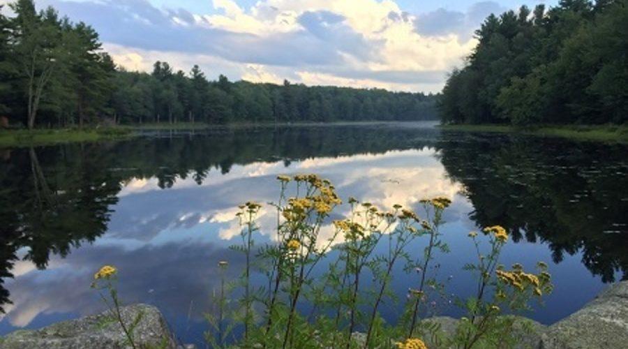 Summertime at Gaston Pond