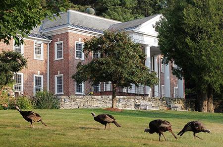 Wild turkeys at IMS Retreat Center